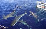 ハワイでサメを見よう!、シャークアドベンチャー